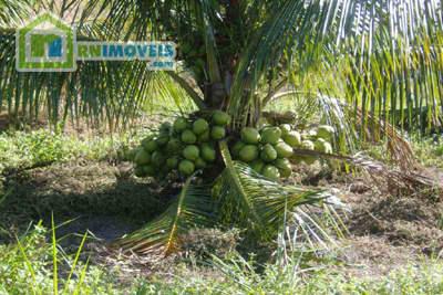 Fazenda de Coco na Bahia